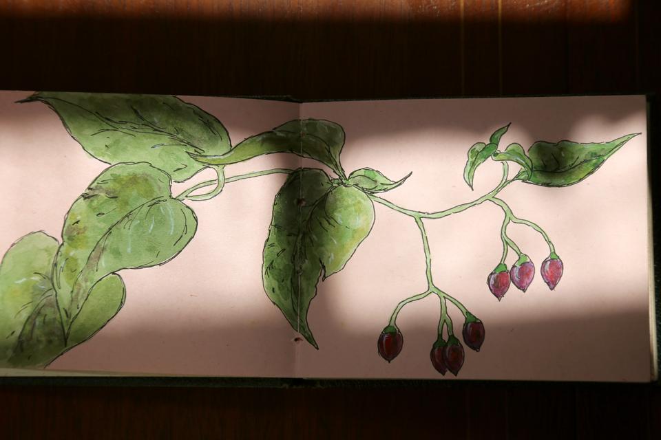 seasonal-journal-veronica-roth-3