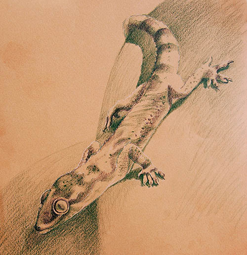 how to draw gecko