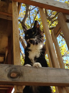 Toulouse In Tree House 3