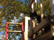 Toulouse In Tree House 2
