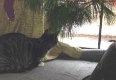 Feline birdwatcher 1