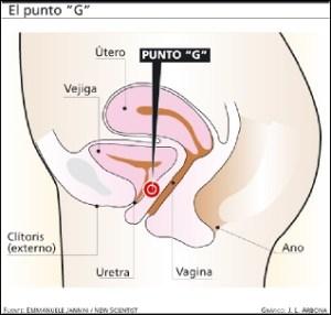 Partes de la vagina