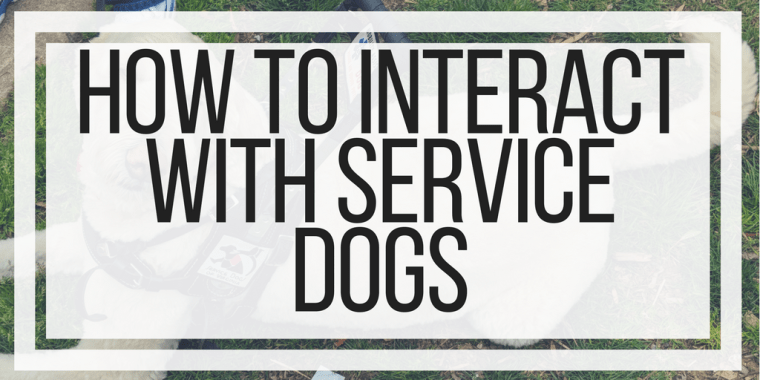 How To Interact With Service Dogs