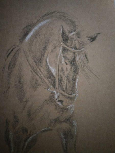 Andalusian in charcoal