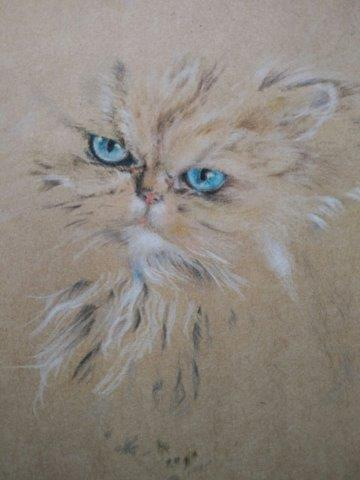 Fluffy cat 3