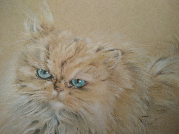 Fluffy cat close