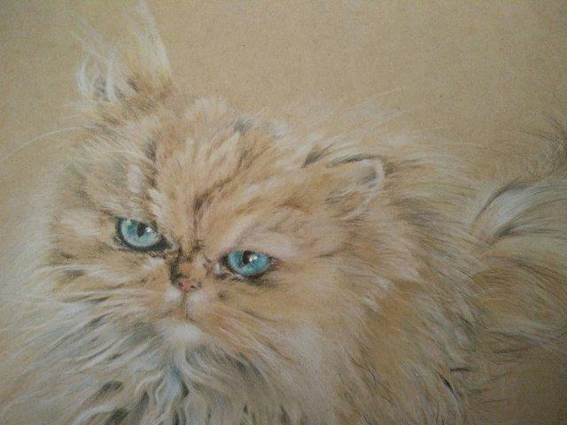 Fluffy cat closer