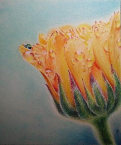 dew on flower 9