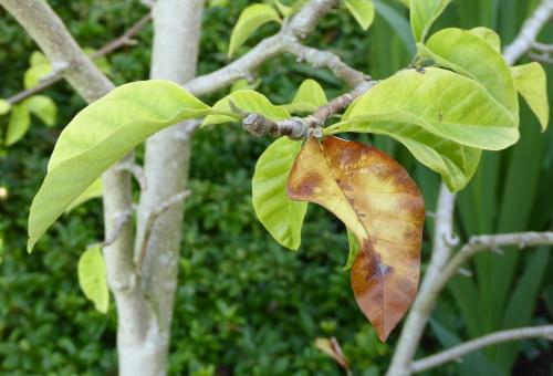 57 magnolia unhappy