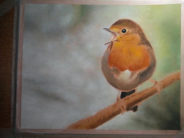 Drawing robin 3