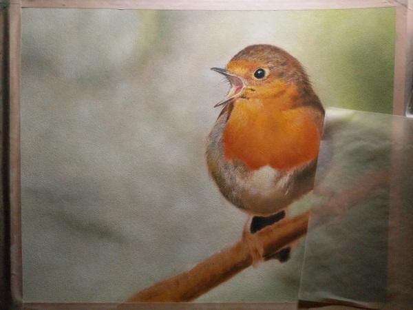 Drawing robin 5