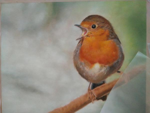 Drawing robin 6