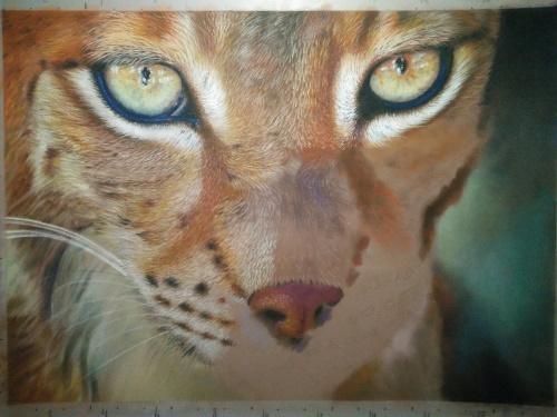 Tekening lynx 12