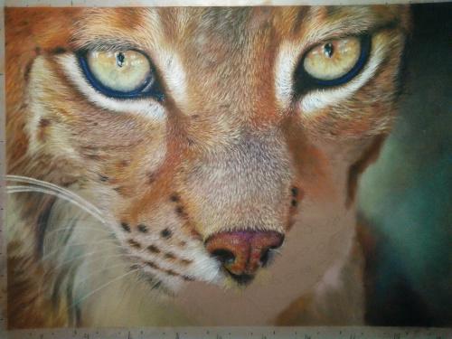 Tekening lynx 14