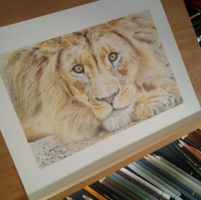 tekening leeuw drawing lion
