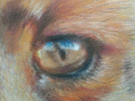 drawing fox eye detail