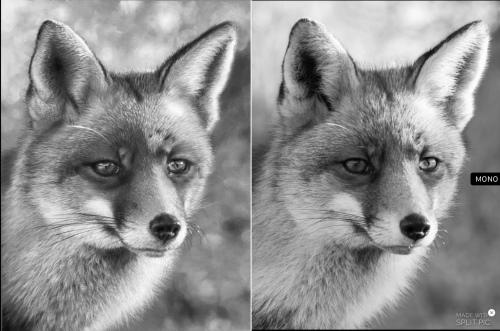 drawing fox black and white comparison