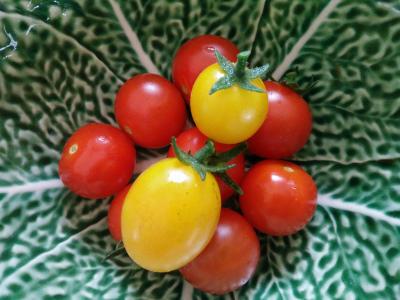 tomaatjes uit eigen tuin