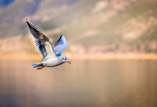 bird-3158784_1920
