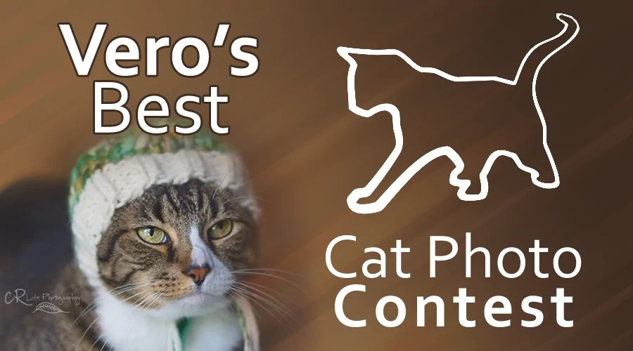 veros-best-cat-photo-contest-2015