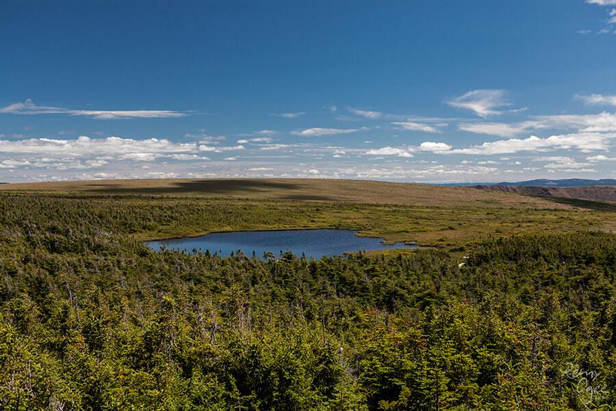 Image au Mont Albert pour notre article 4 sentiers pour de surprenantes rencontres en Gaspésie