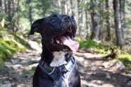 Photo au Mont Gosford pour notre article Top 7 – Randos à faire avec son chien (Partie 2)