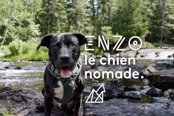Enzo, le chien nomade !