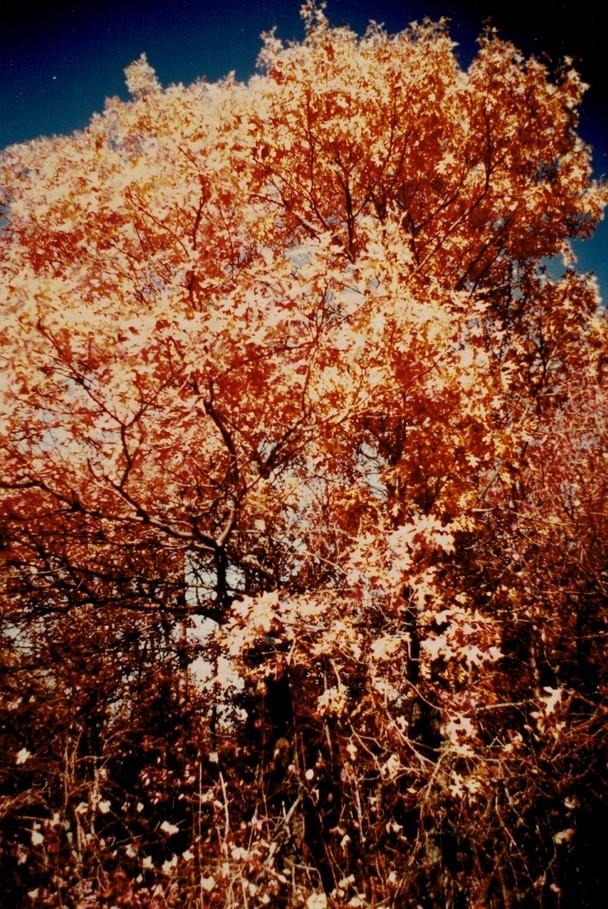 Tinley-Creek-1__Kodak-Ektacolor-IE-135-20a.jpg