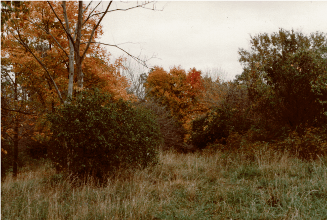 East Goeselville Grove 2__Konica Color