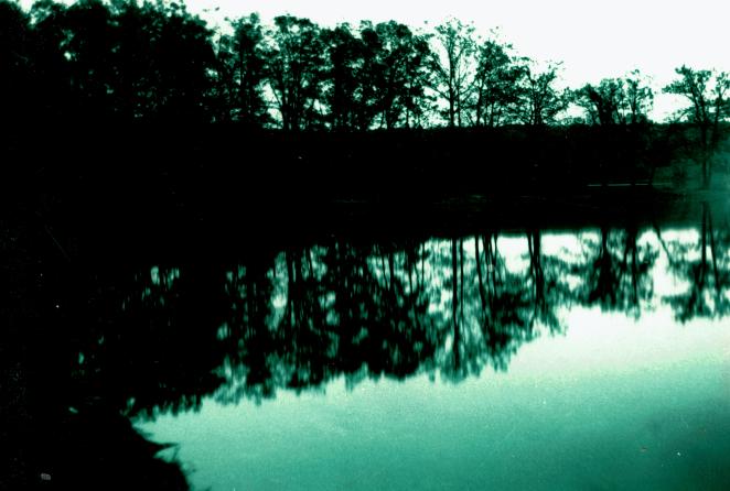 Maple Lake_Green.png