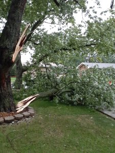 Derecho EF1 Tornado in Oak Forest, Illinois Photo #3
