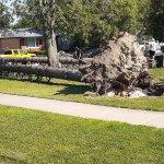 Derecho EF1 Tornado in Oak Forest, Illinois Photo #2