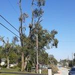 Derecho EF1 Tornado in Oak Forest, Illinois Photo #6