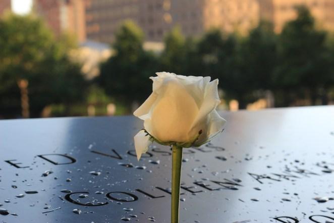 white-rose-on-9-11-memorial-4903563