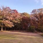 Yankee Woods Grove 3.jpg