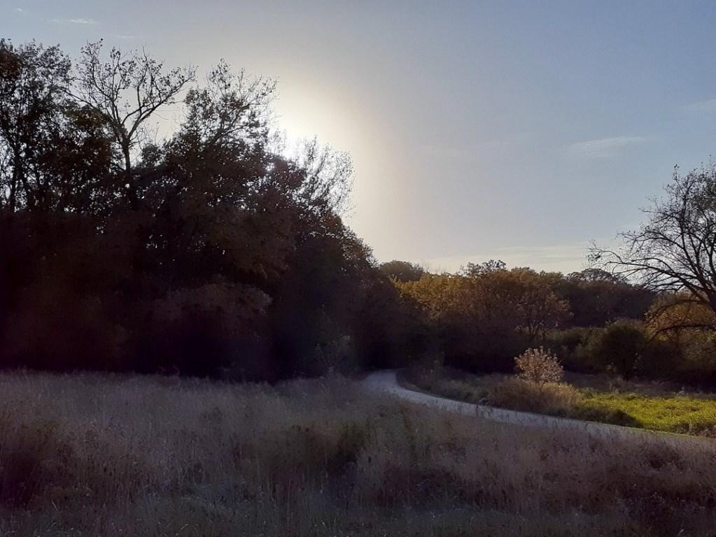 Yankee Woods Grove 5.jpg