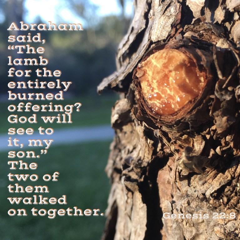 Verse Image for Genesis 22:8 - 1x1