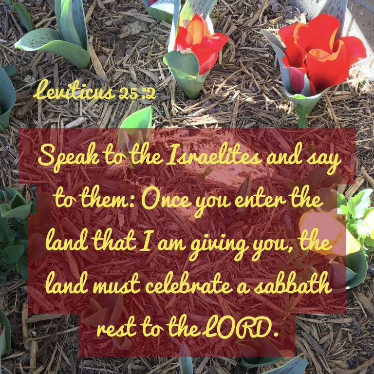 Verse Image for Leviticus 25:2 - 1x1