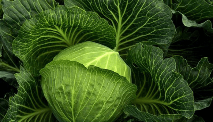 Beauty and Health with Cabbage