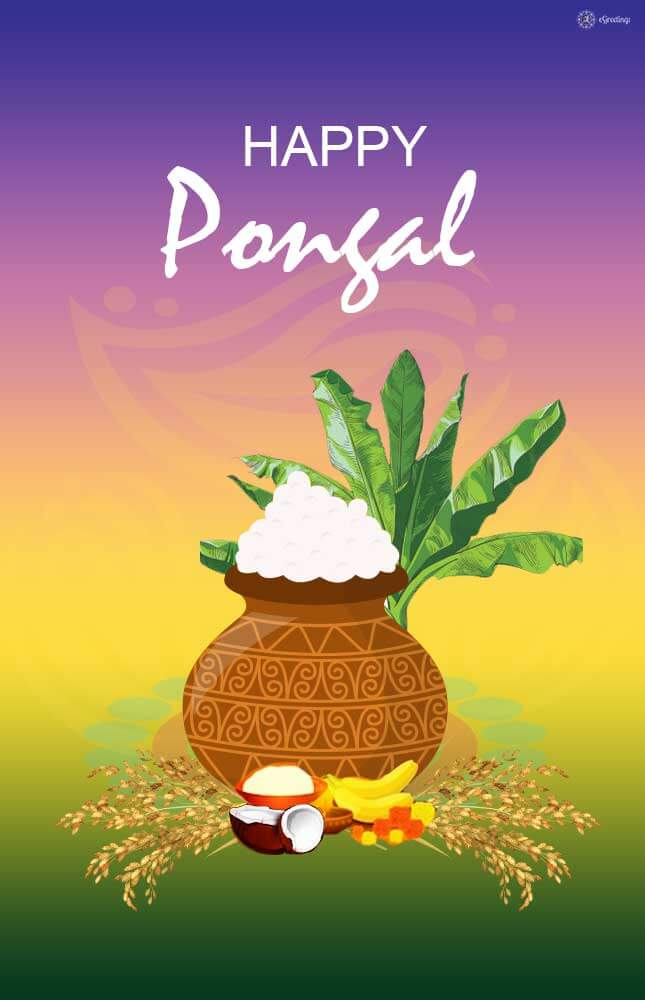 Happy Pongal Whatsapp Status