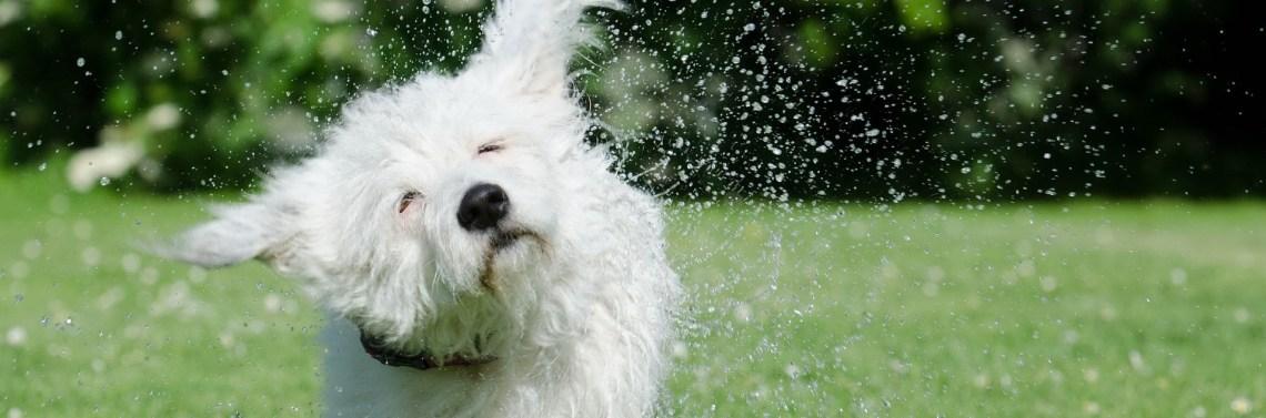 Le secouage d'énergie tel un vrai chien mouillé pour faire circuler son énergie !