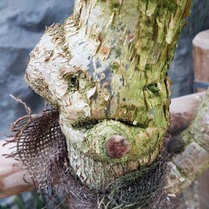 Tronc d'arbre avec une tête d'homme sylvothérapie écologie