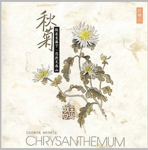 CD Chrysanthemum