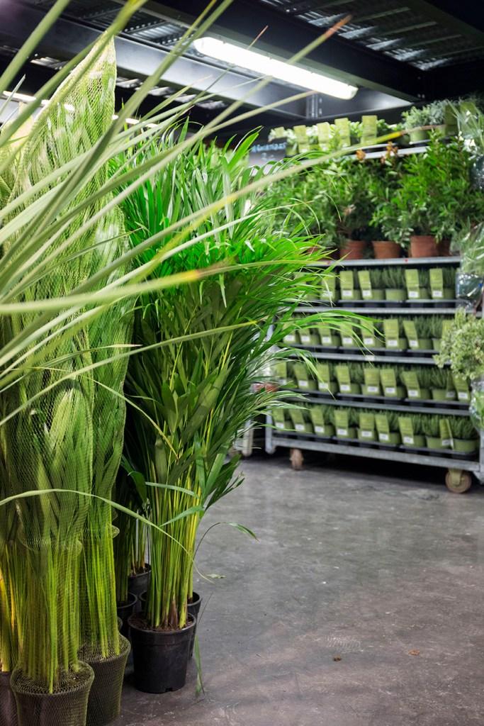 evenement montpellier plante