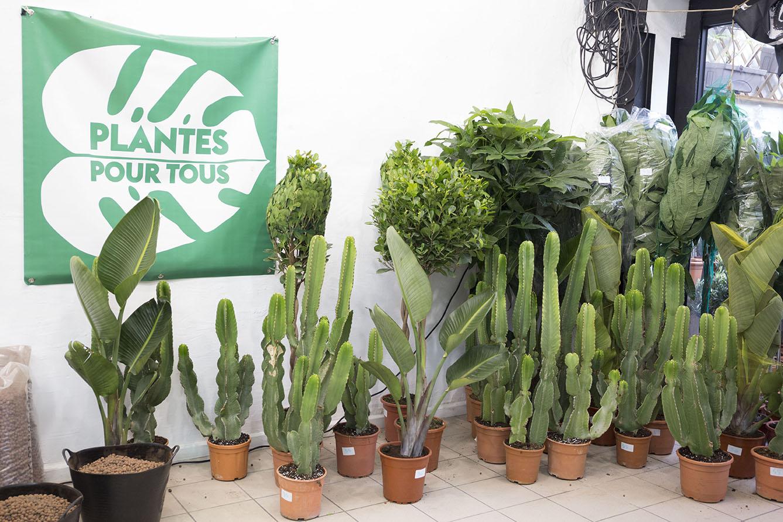 vente plantes pour tous verte