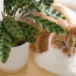 leon george plante