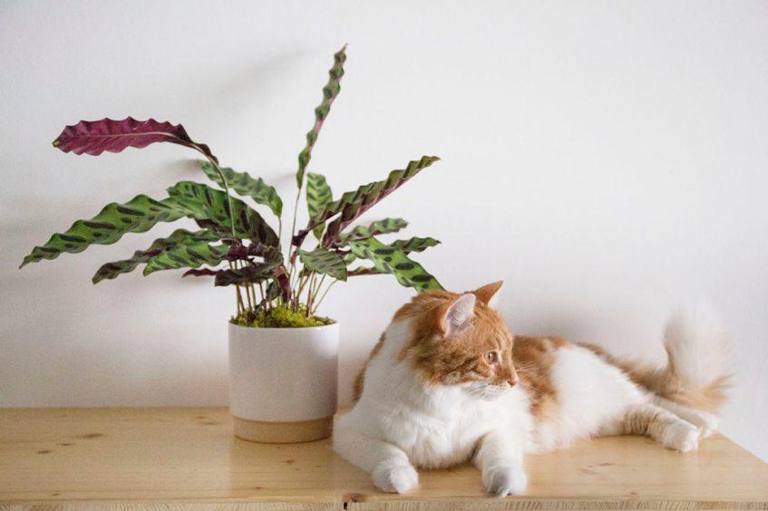 leon george plantes