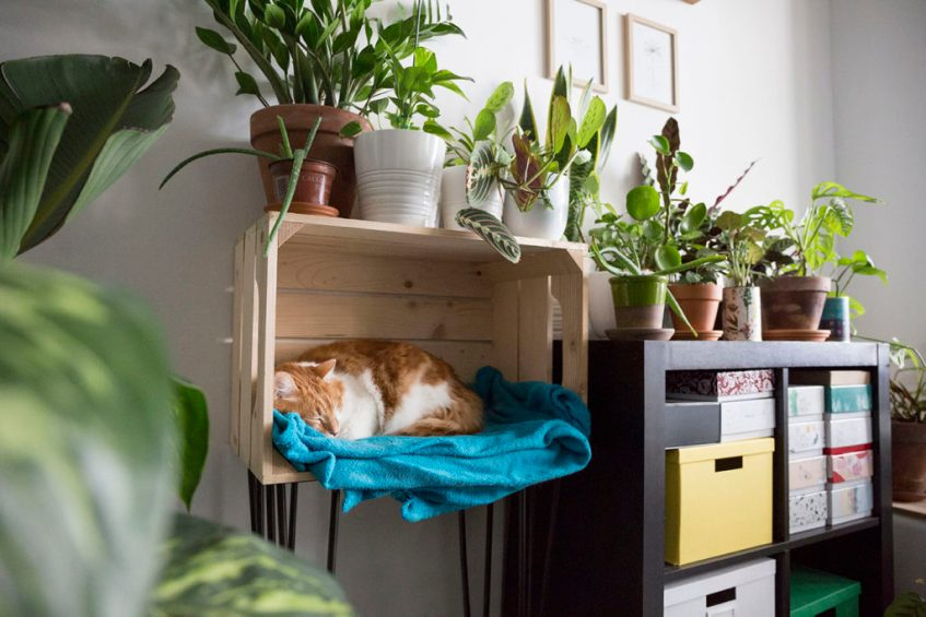 plante interieur chat
