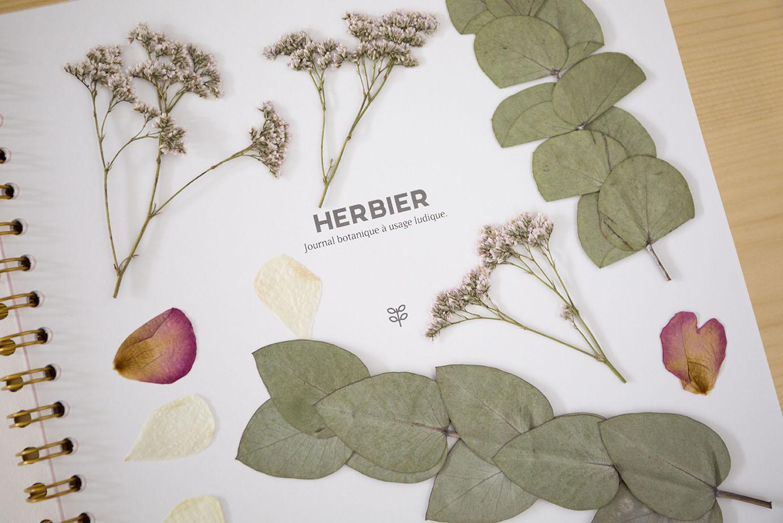 herbier presse fleur