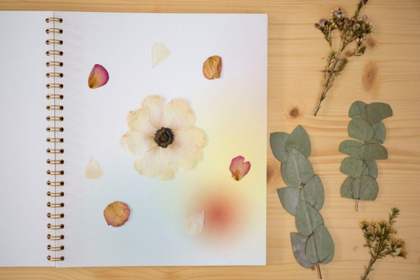 presse fleur herbier specimen